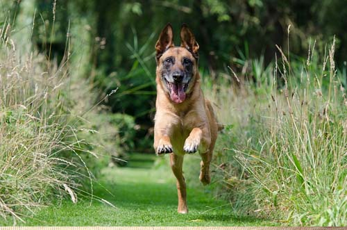 Useful Dog Obedience Training Tips